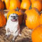 5 buoni motivi per cui il tuo cane dovrebbe mangiare la zucca