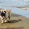Dolori articolari nel cane? Ecco tutto quello che puoi fare!