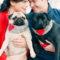 Il carlino: il cane che ama sopra ogni cosa