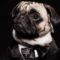 5 personaggi storici innamorati pazzi del cane carlino