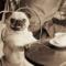 Il carlino, il cane più odiato da Charles Dickens e non solo