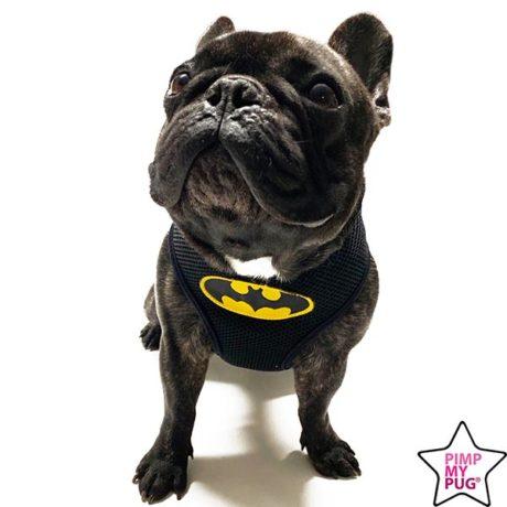 pettorina batman e superman per carlino e bulldog francese