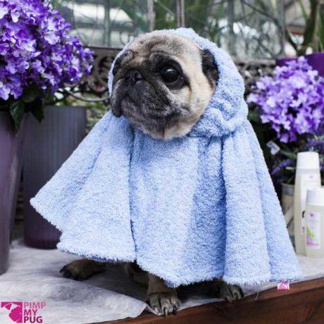 accappatoio a ruota per carlini e bulldog francesi, doug the pug