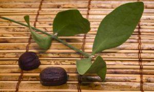 olio-di-jojoba-CANE
