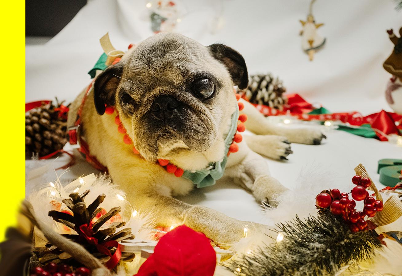 Speciale Natale 2018 - Pimp My Pug